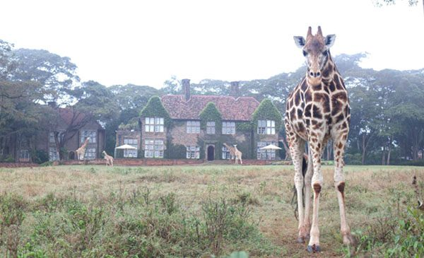 giraffe-manor-nairobi-a-kenyan-sanctuary-safari-06