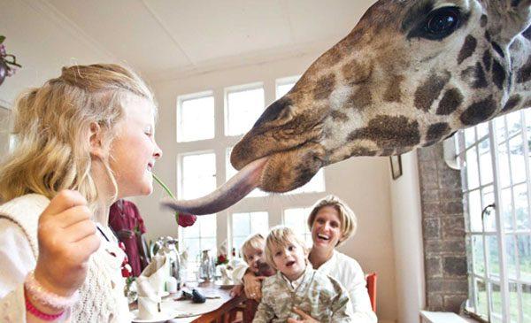 giraffe-manor-nairobi-a-kenyan-sanctuary-safari-07
